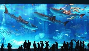 沖縄美ら海水族館 イメージ