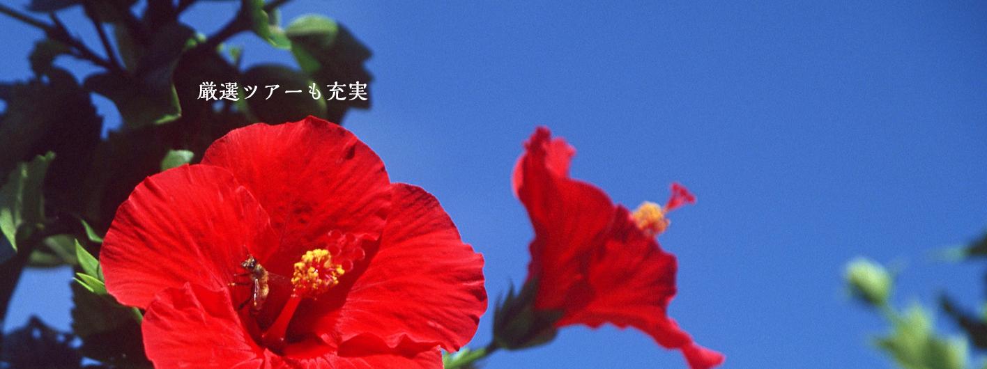 オプショナルツアーで沖縄をあそびつくす!