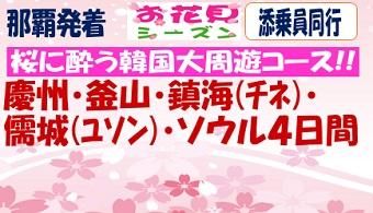 【桜花見】桜に酔う韓国大周遊4日間