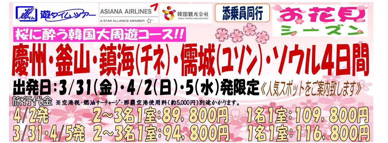 【桜花見】桜に酔う韓国大周遊4日間01