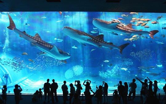沖縄美ら海水族館 nahabusB_kuroshio