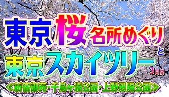 <添乗員同行>東京桜名所めぐり3日間 那覇発