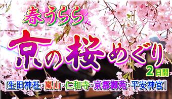 <添乗員同行>春うらら 京の桜めぐり2日間 那覇発 京都桜の名所めぐり