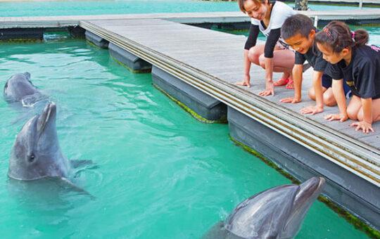 マリンピアザオキナワ イルカ体験 イメージ