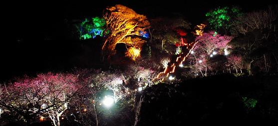 今帰仁城跡のライトアップ(桜まつり)@今帰仁村