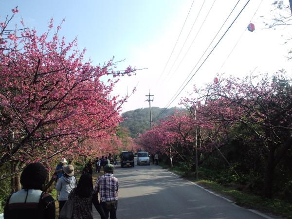 桜まつり©SG