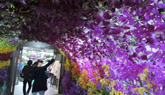 orchid-show03©SG