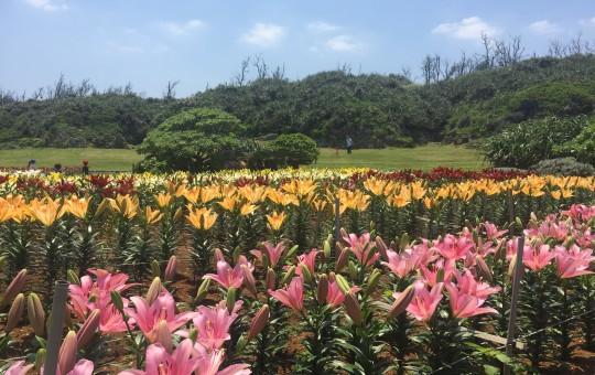 伊江島 リリーフィールド公園