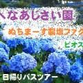 bus_ajisai00